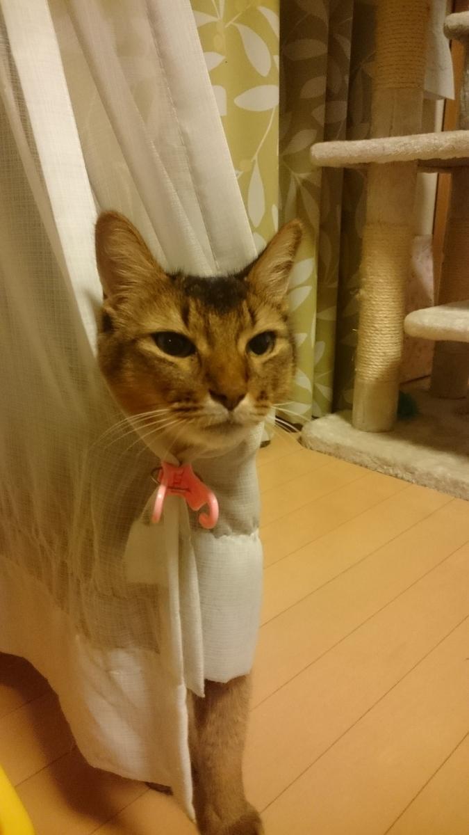 f:id:cat-cat-48:20200810103827j:plain