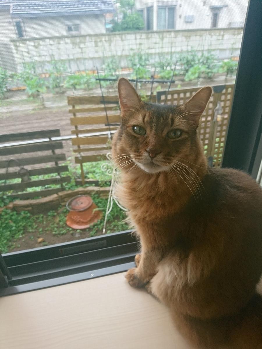 f:id:cat-cat-48:20200810103937j:plain