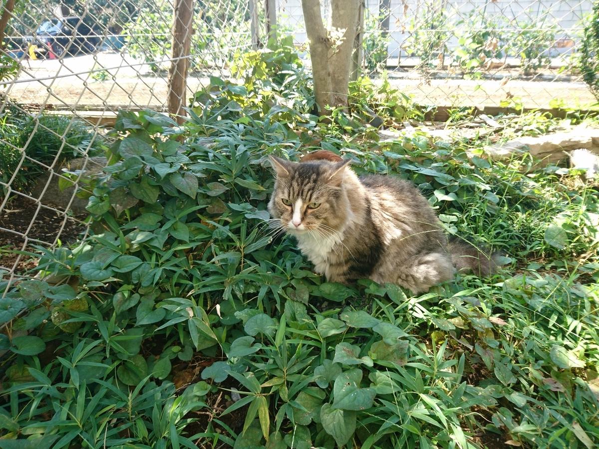f:id:cat-cat-48:20200815193149j:plain