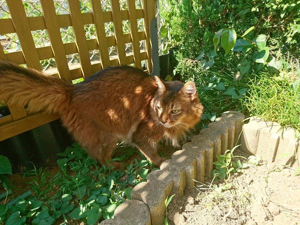 f:id:cat-cat-48:20200815193232j:plain
