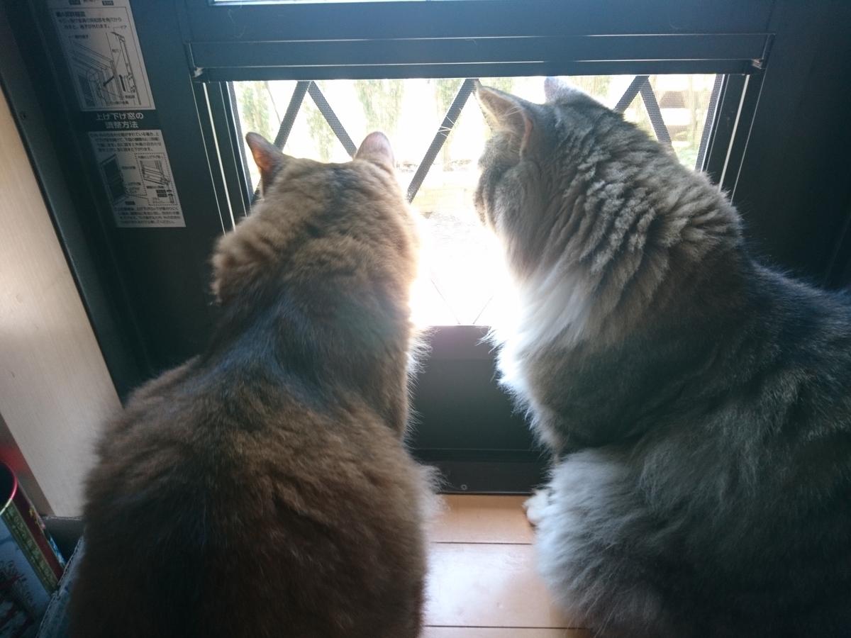 f:id:cat-cat-48:20200815193307j:plain