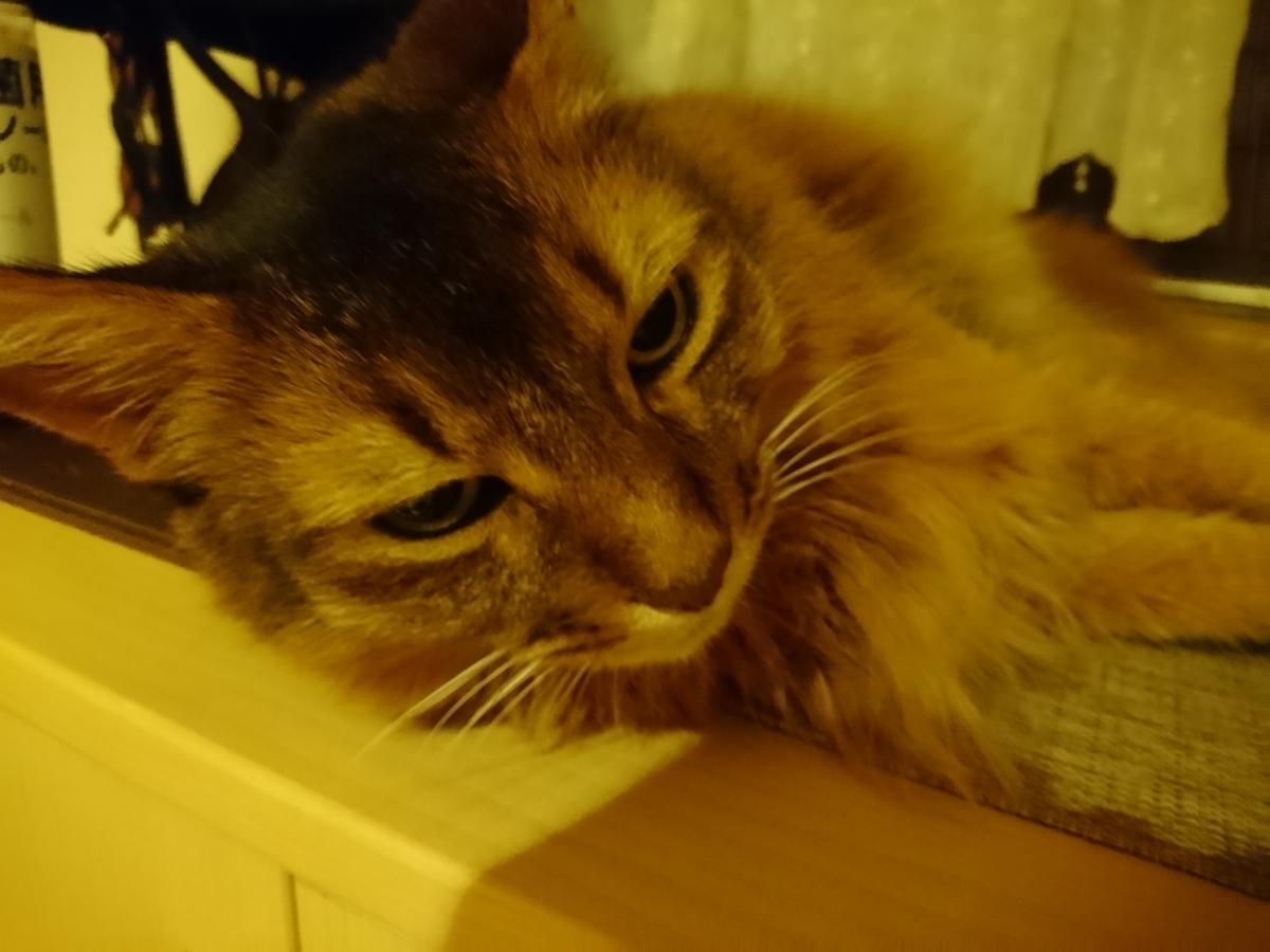 f:id:cat-cat-48:20200815194039j:plain