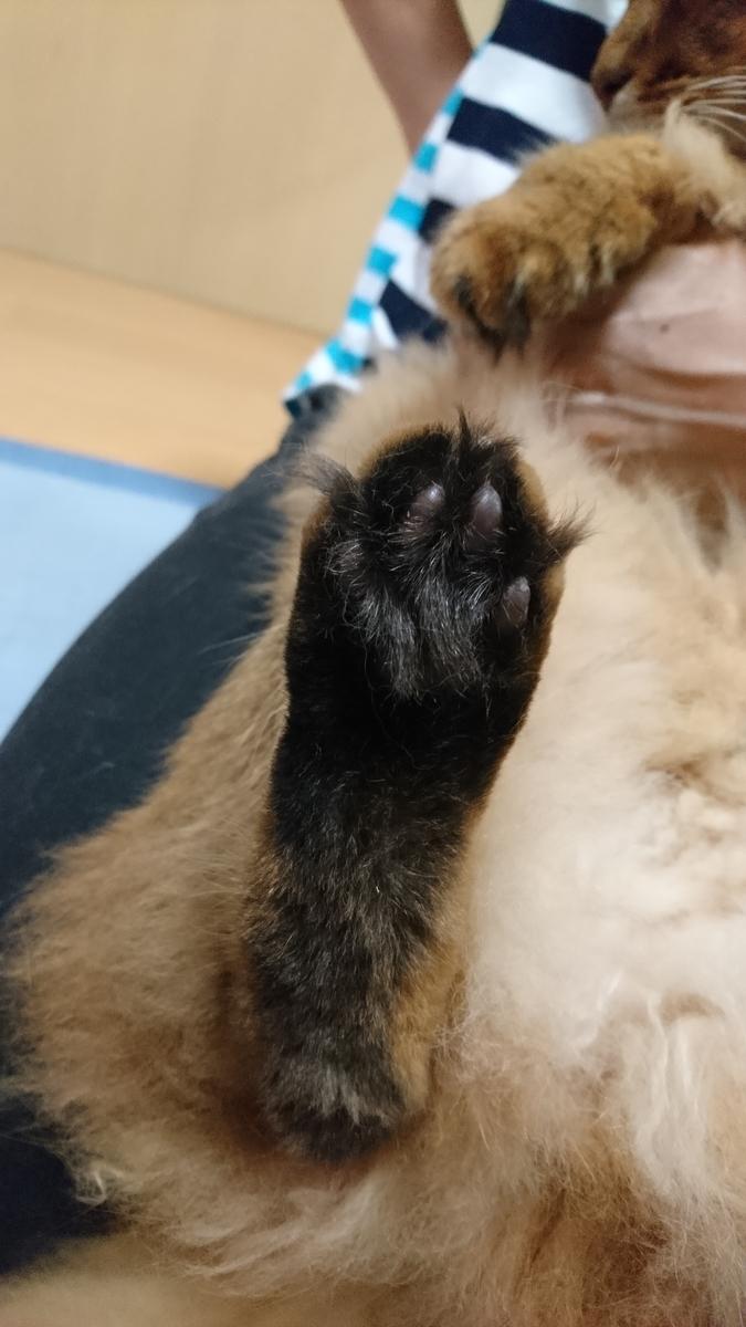 猫の足の裏の毛
