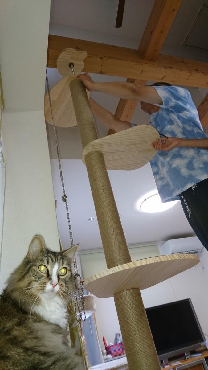 cat towerを組み立てる