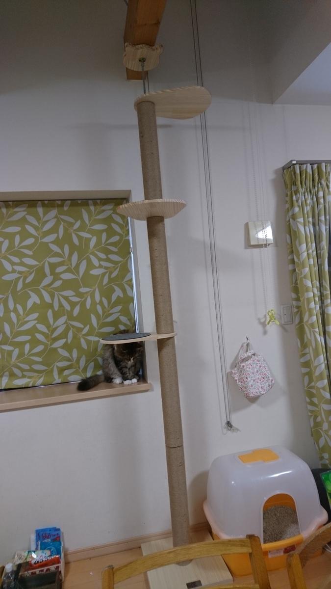 cat tower設置完了