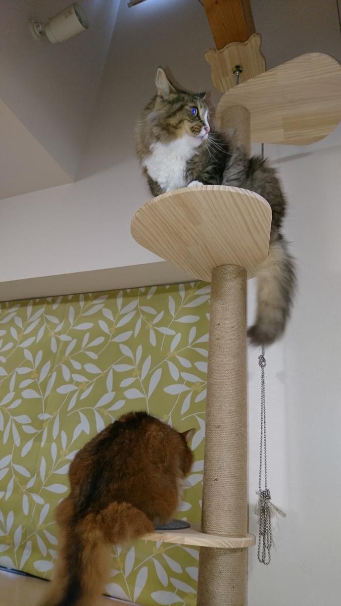 cat towerに登る猫