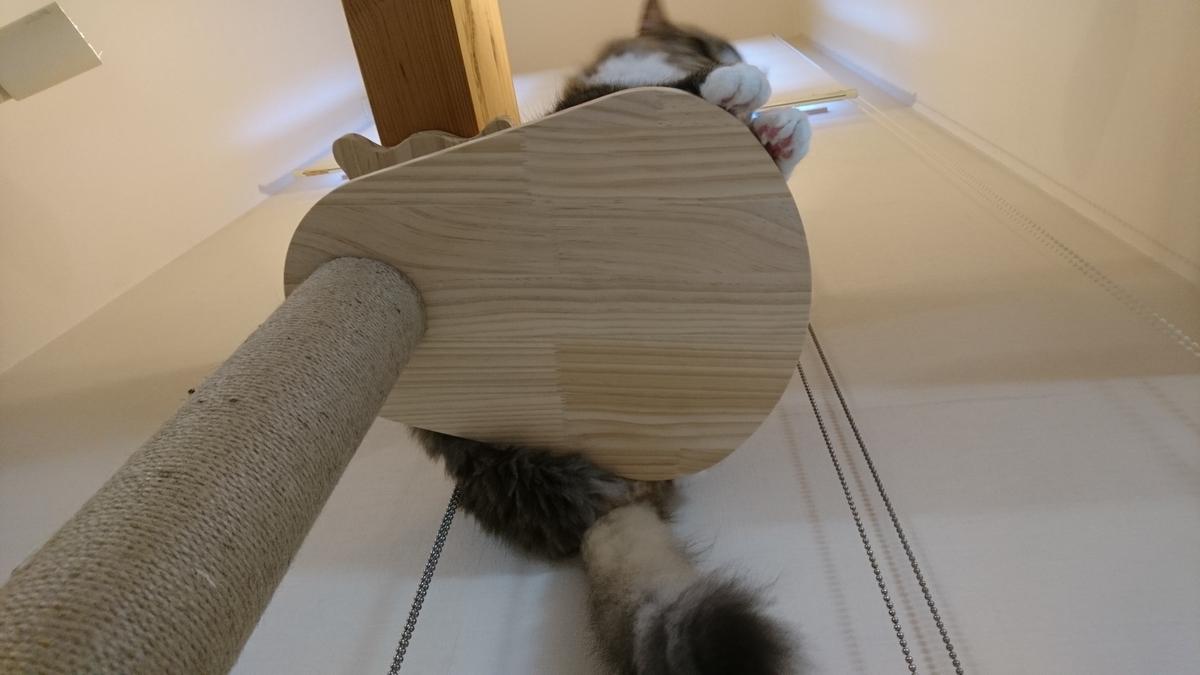 cat towerの上で寝そべる猫、お尻もすっぽり