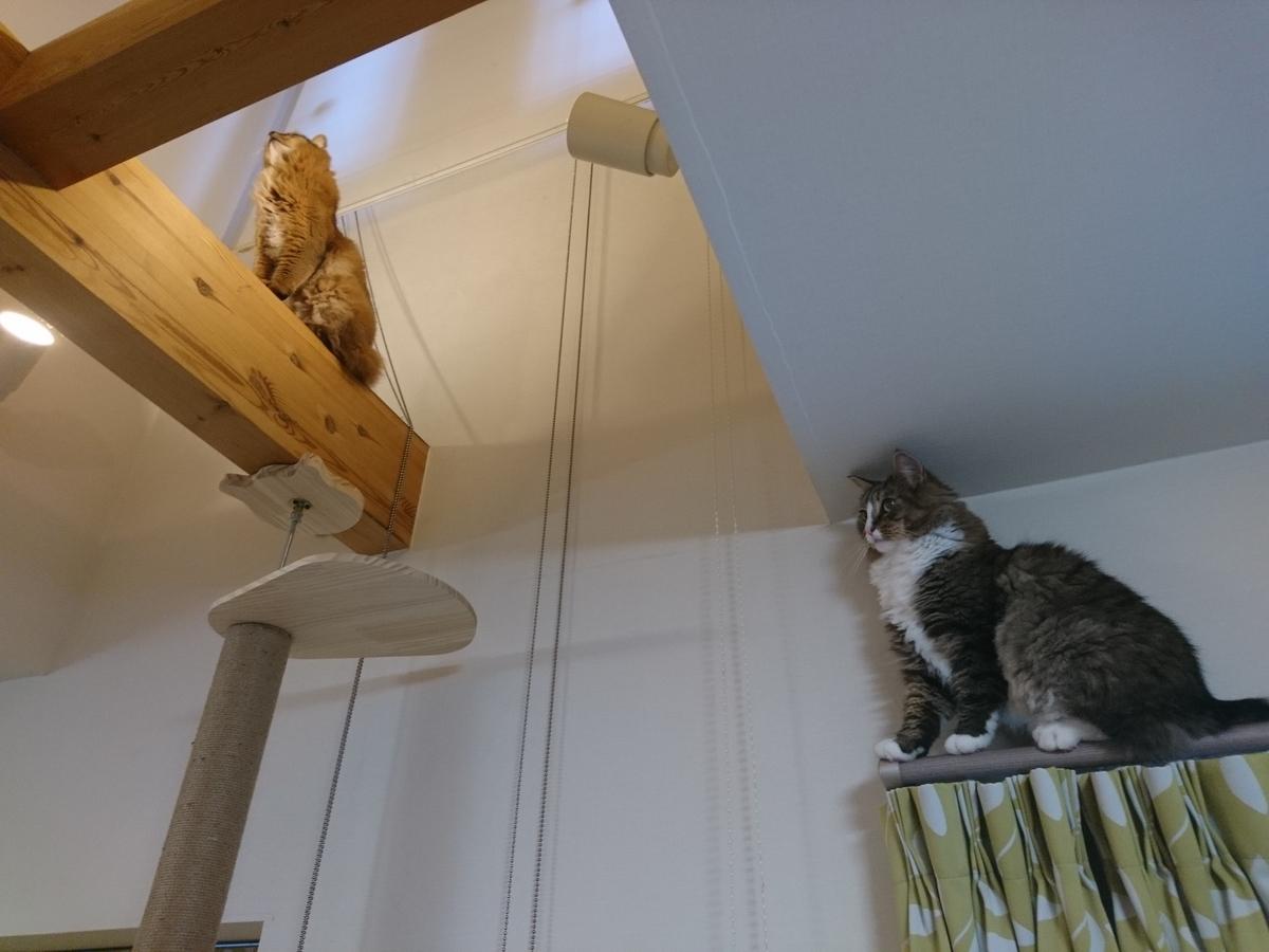 梁の上を歩く猫