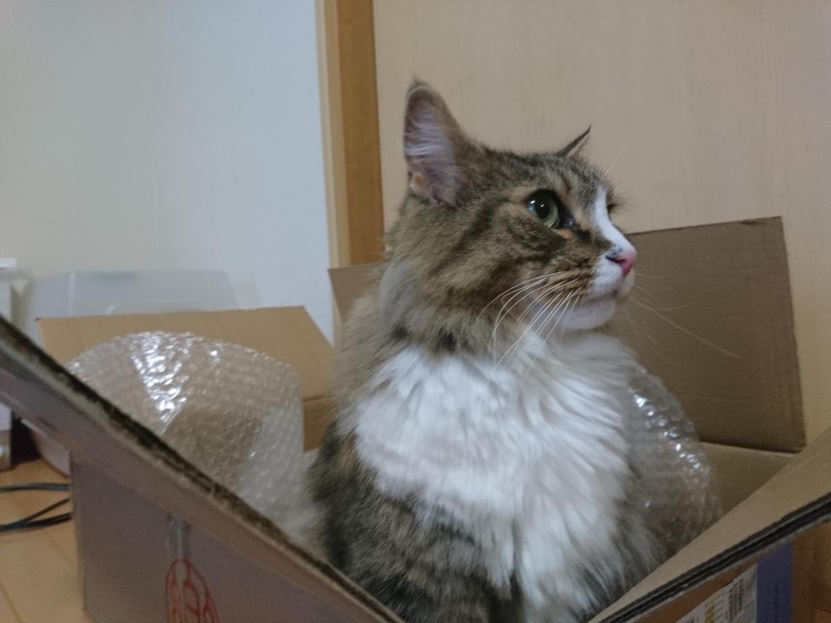cat towerの段ボールに入る猫