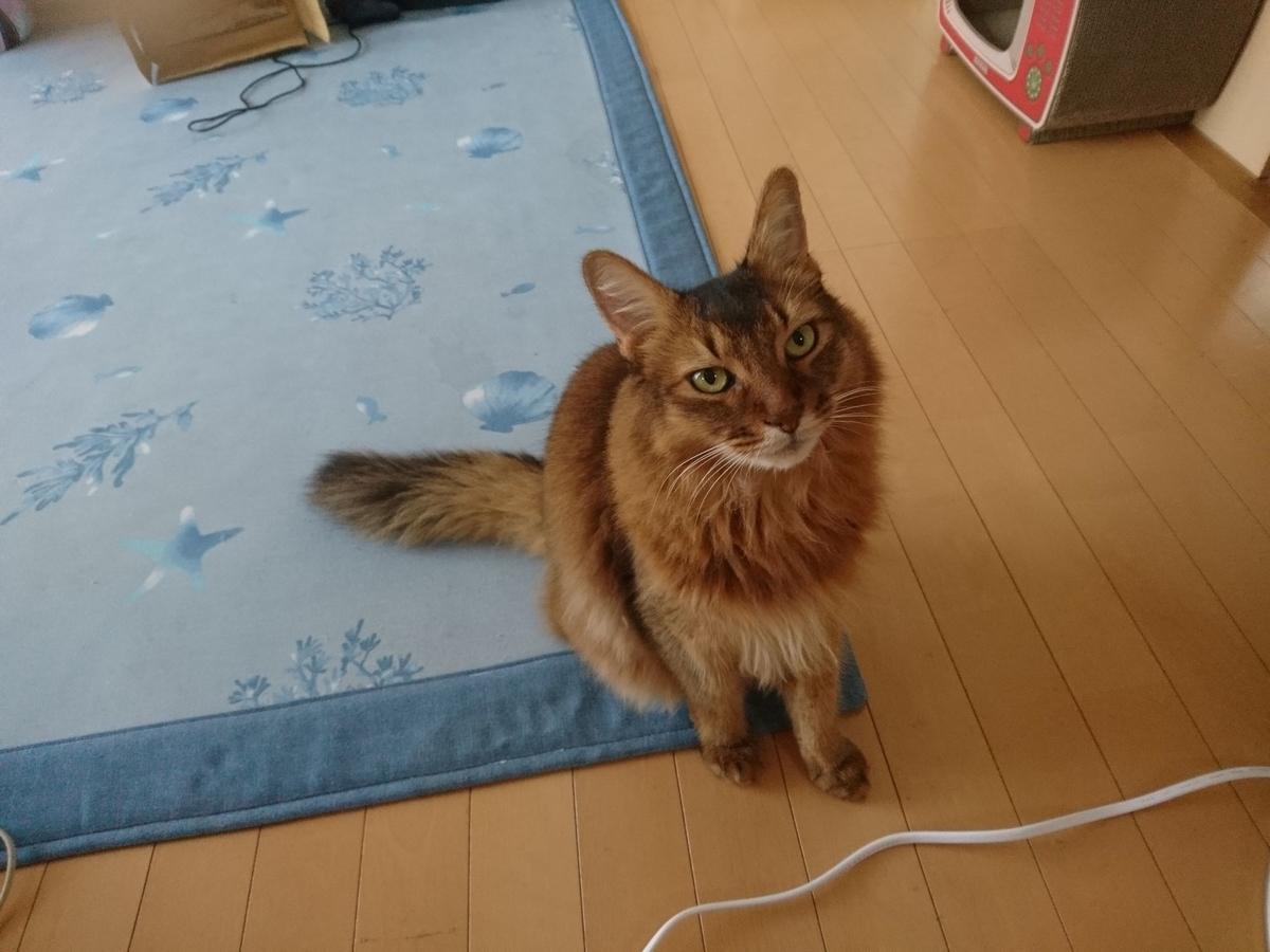 横たわる猫、チー