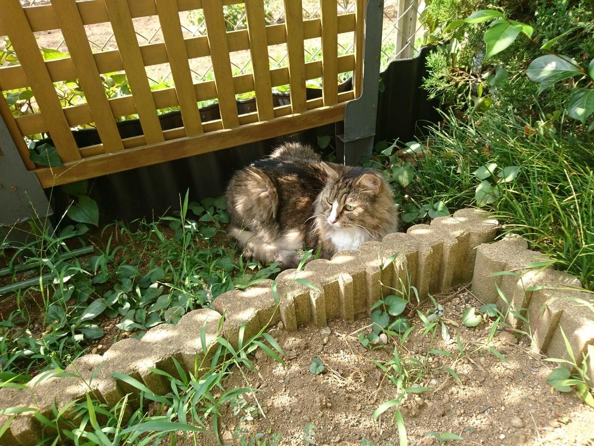 リラックスの猫、トト