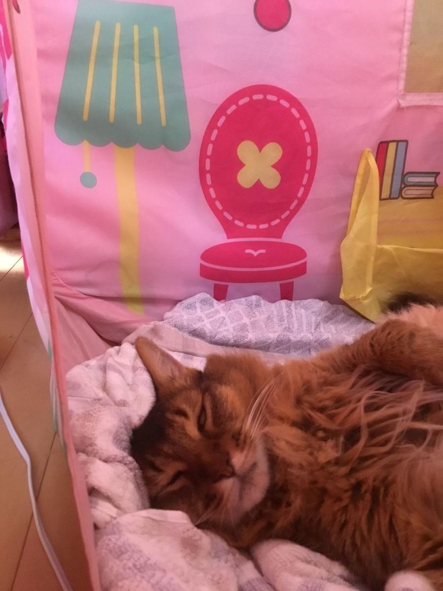 白目をむいて寝る猫、チー