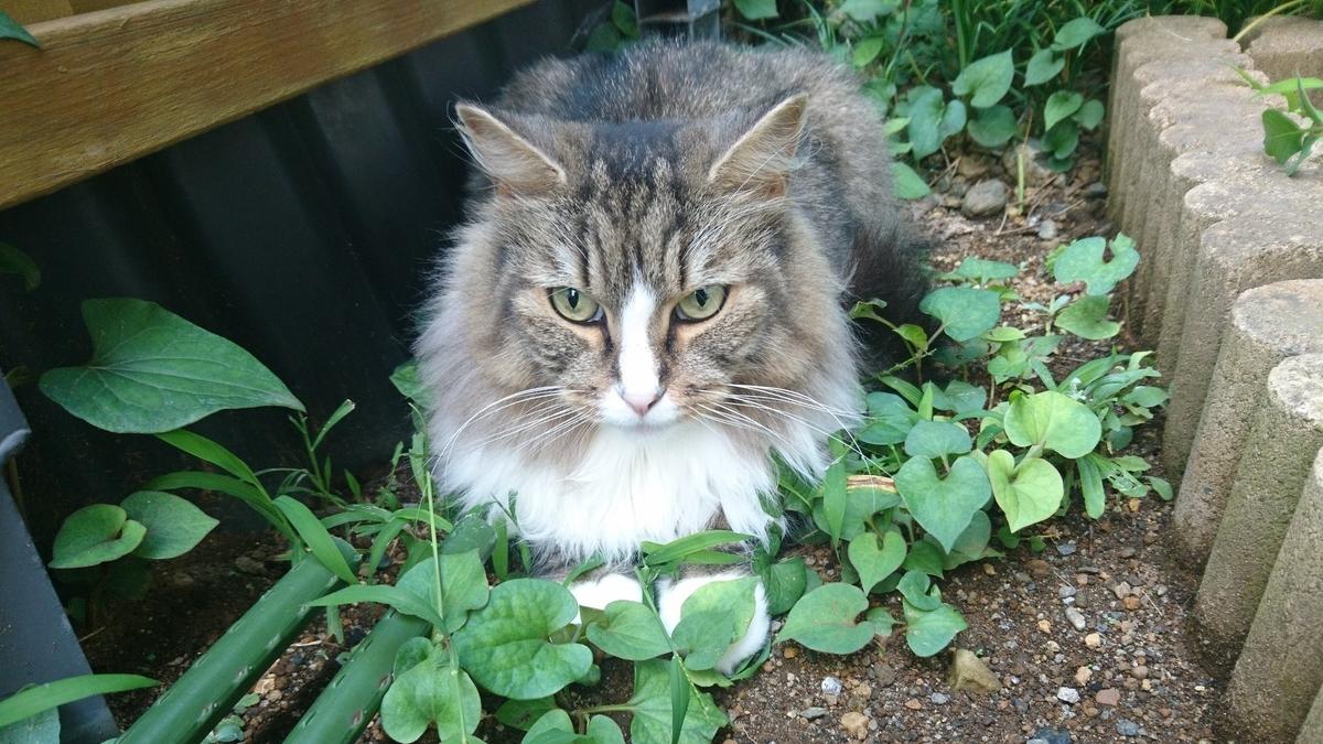 庭の猫。トト