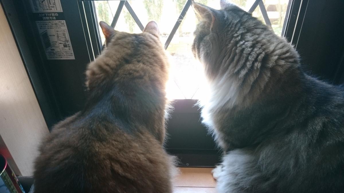 仲良く外を眺める猫、トトとチー