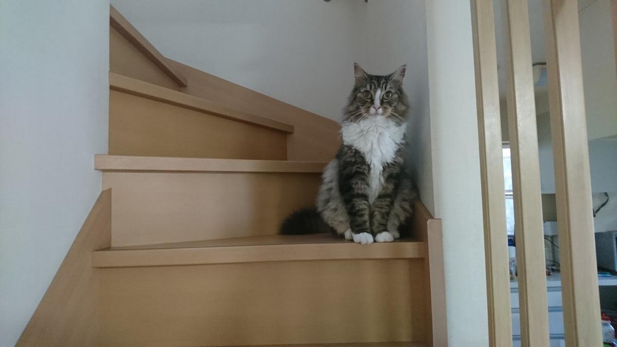 階段に座る猫、トト