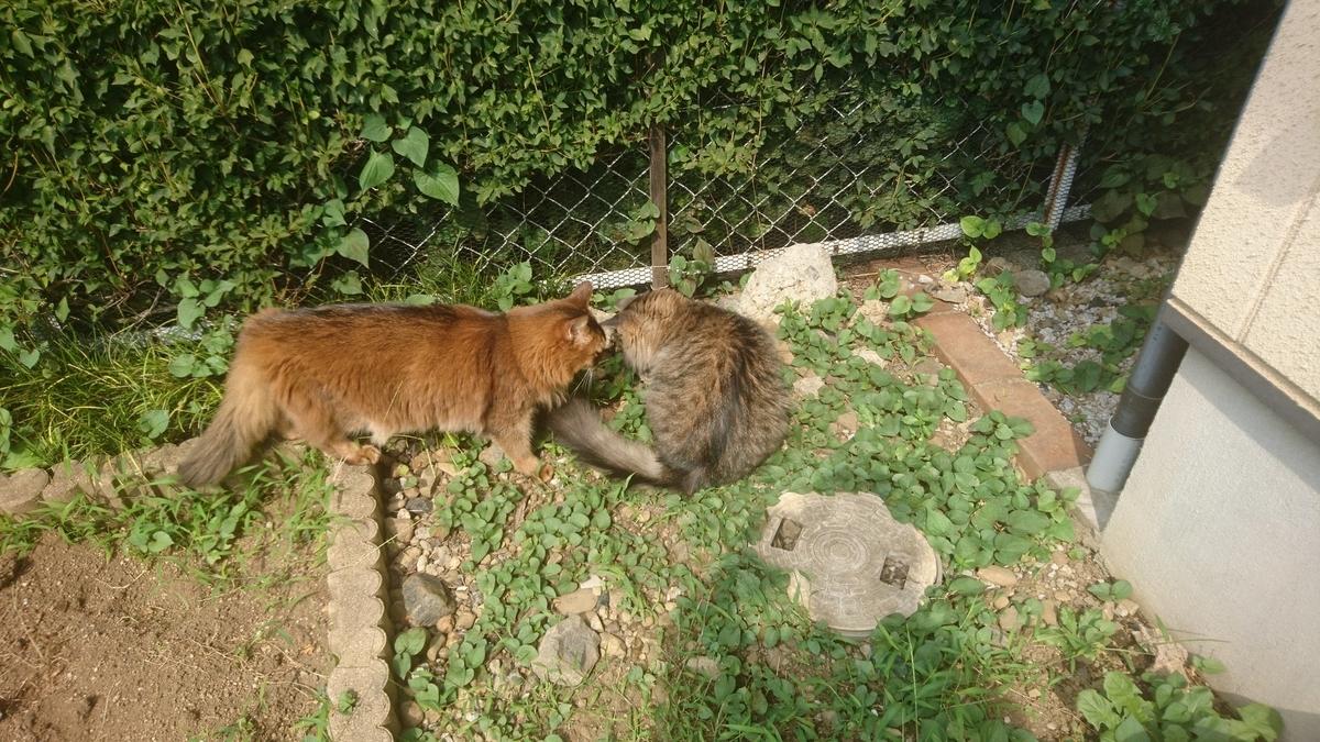 f:id:cat-cat-48:20200831202605j:plain
