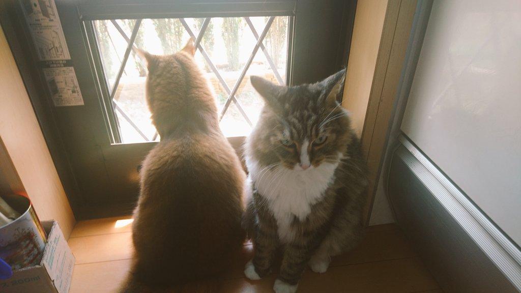 f:id:cat-cat-48:20200831212528j:plain