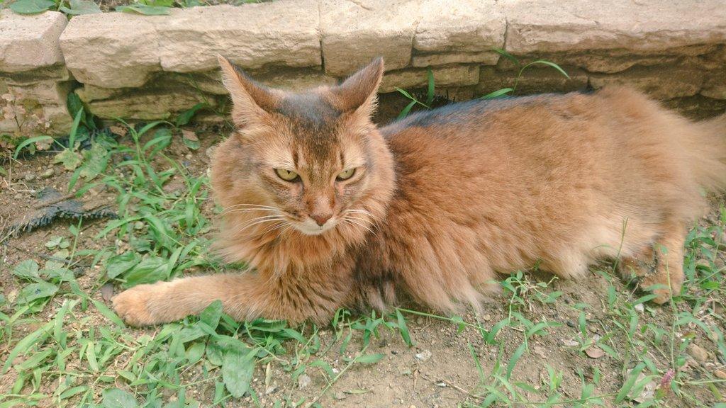 f:id:cat-cat-48:20200831212621j:plain