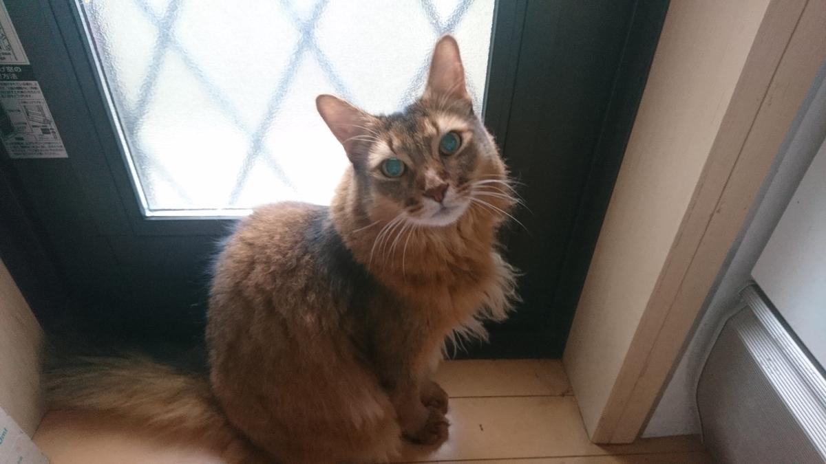 f:id:cat-cat-48:20200831212702j:plain