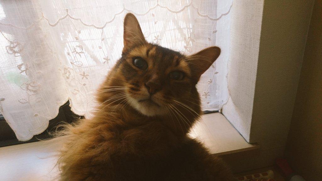 f:id:cat-cat-48:20200831212944j:plain