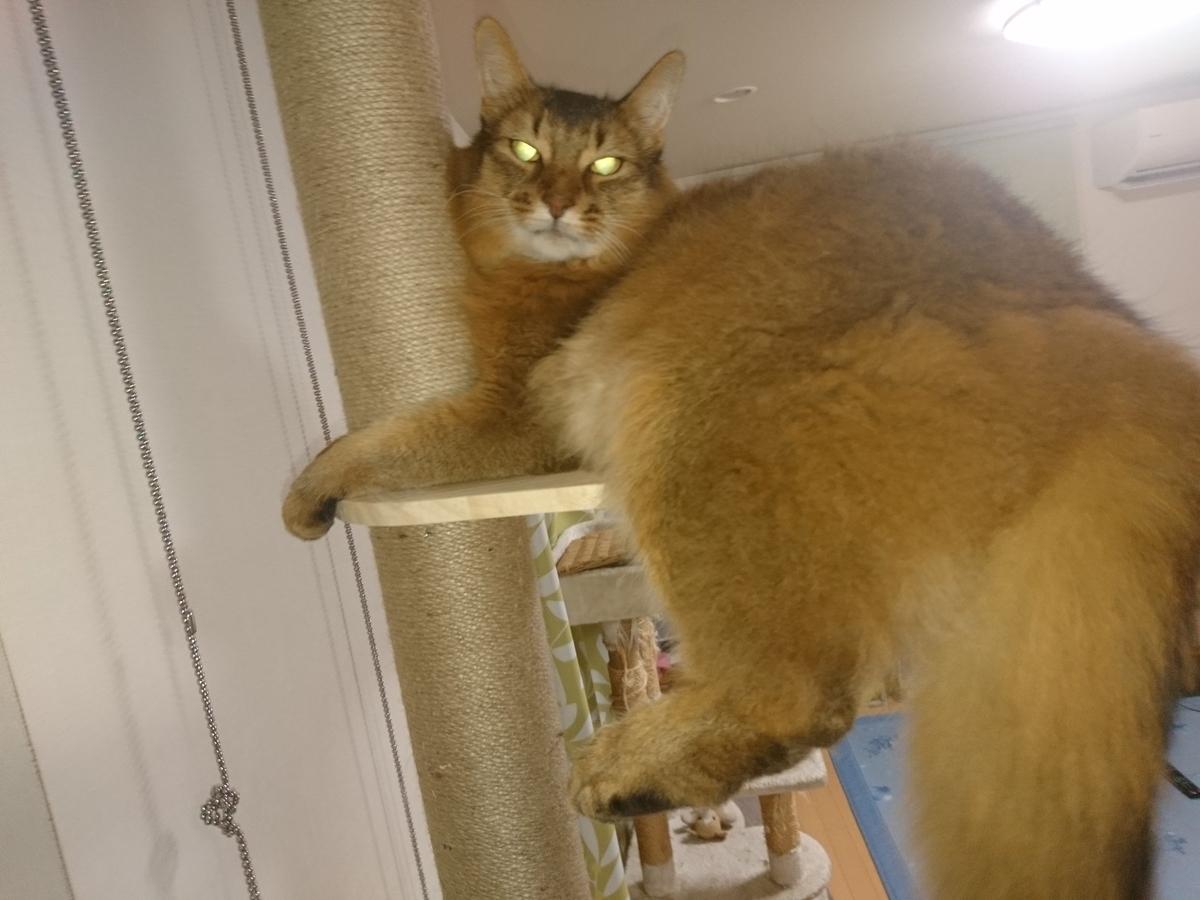 f:id:cat-cat-48:20200831213558j:plain