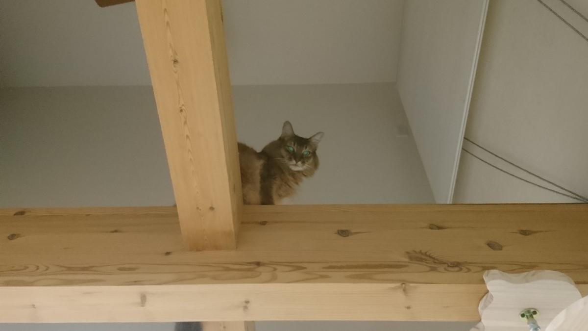 f:id:cat-cat-48:20200831213746j:plain