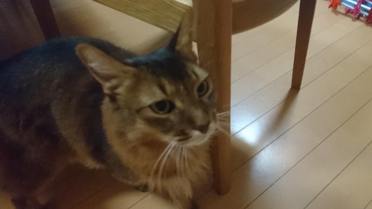 f:id:cat-cat-48:20200831213926j:plain