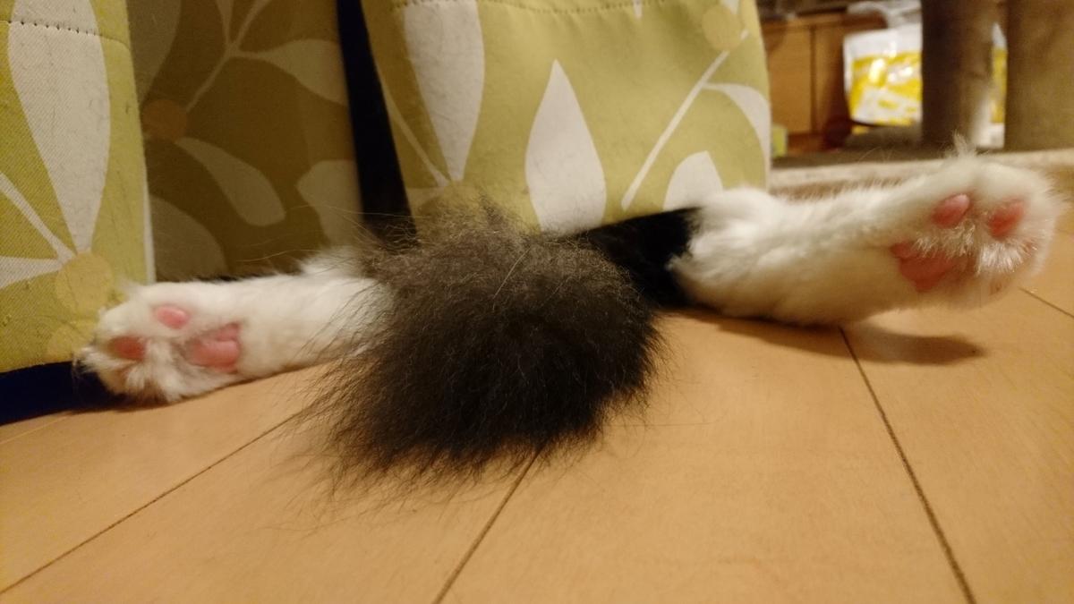 おまた丸出しの猫