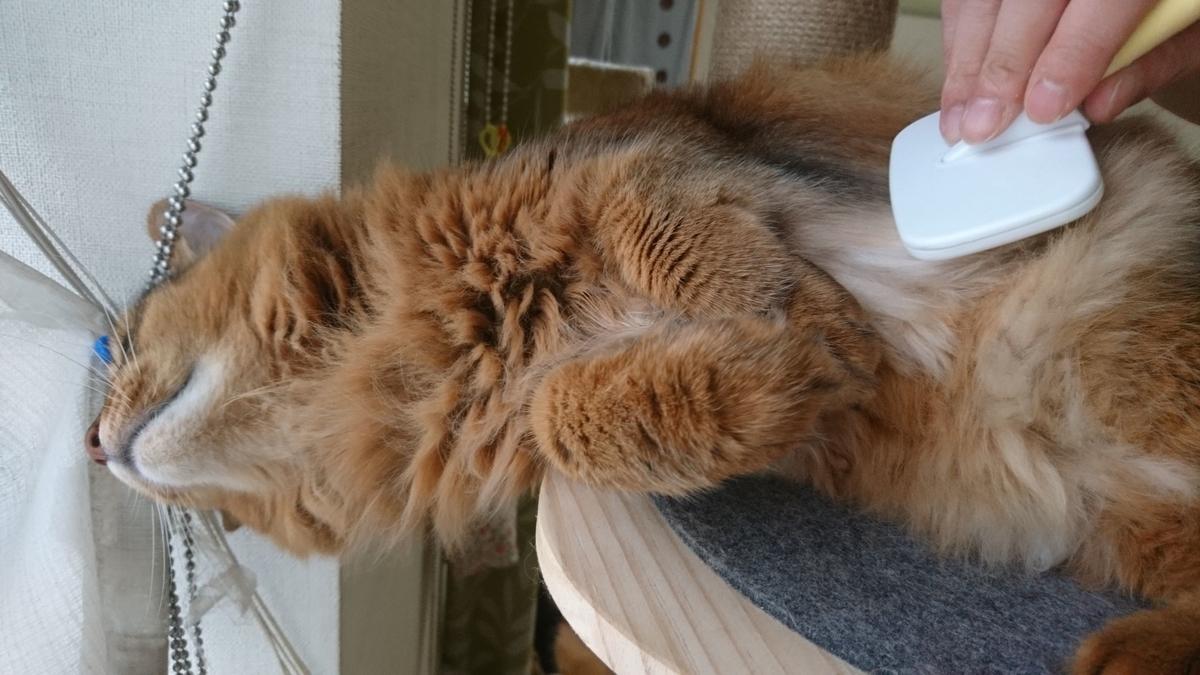 f:id:cat-cat-48:20200916160414j:plain