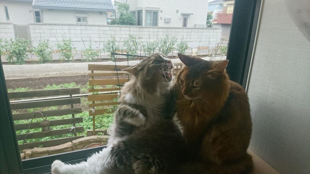ちょっかいを仕掛ける猫