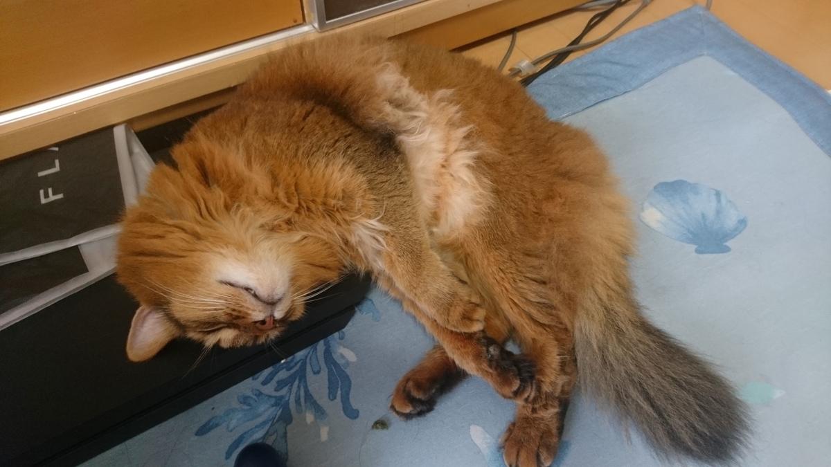 PS4を枕に寝る猫