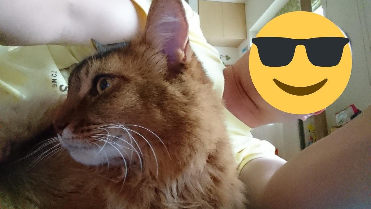 人の横で横たわる猫