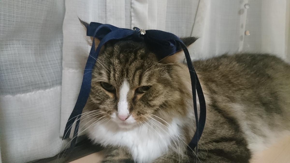 リボンを付けた猫