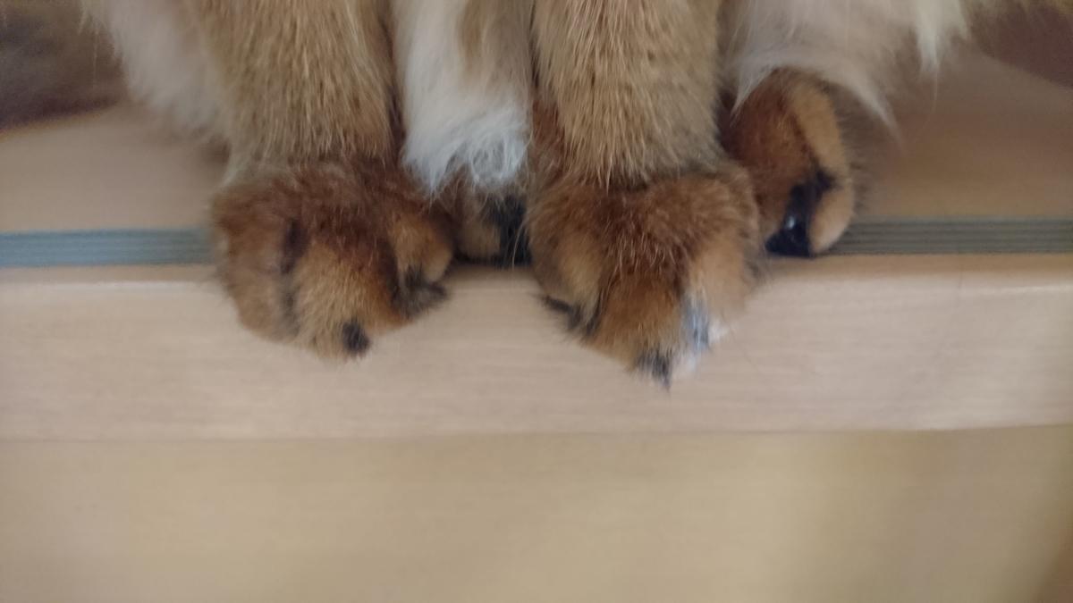 猫の手、チー