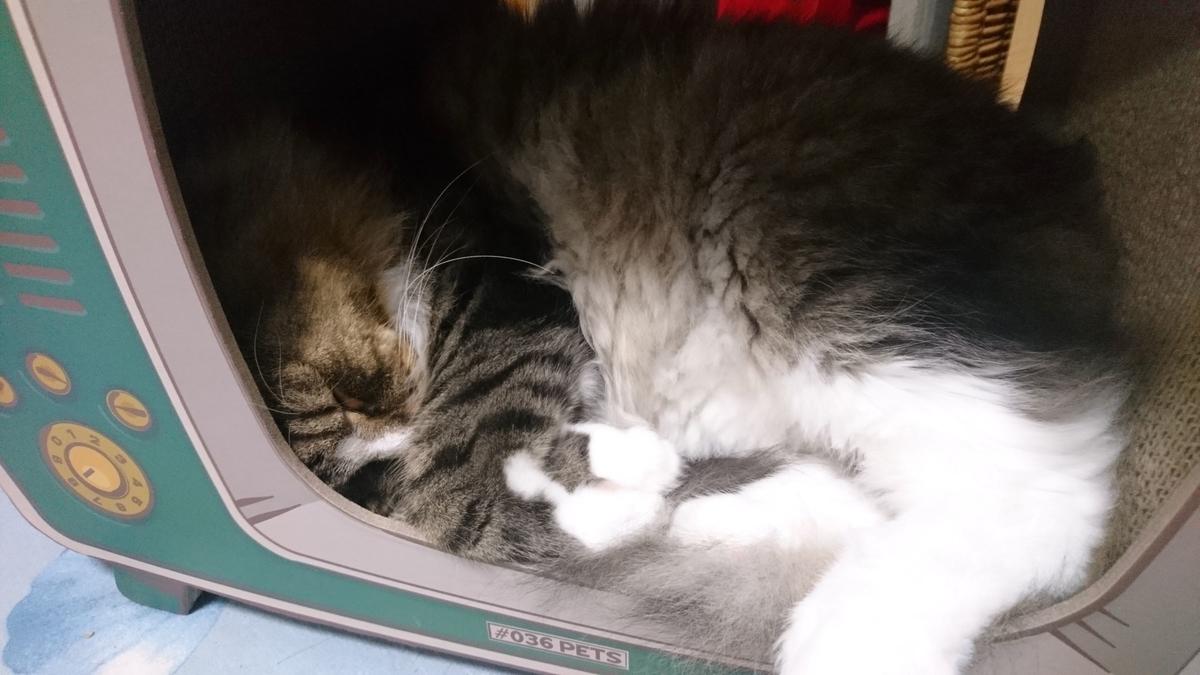 寝ている猫、トト