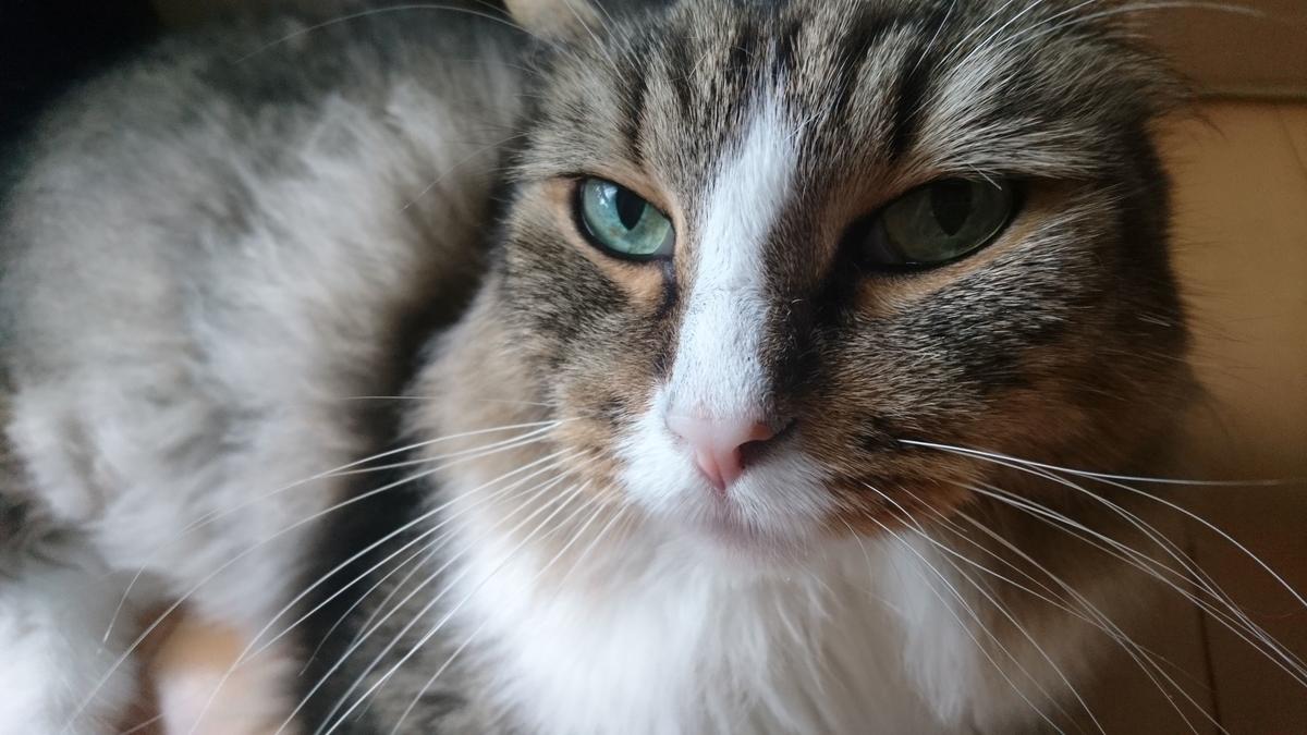 猫のアップ写真、トト