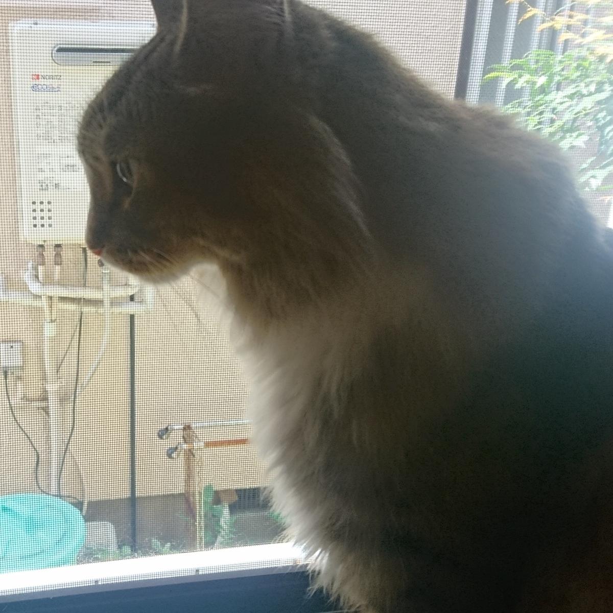二枚目猫、トト