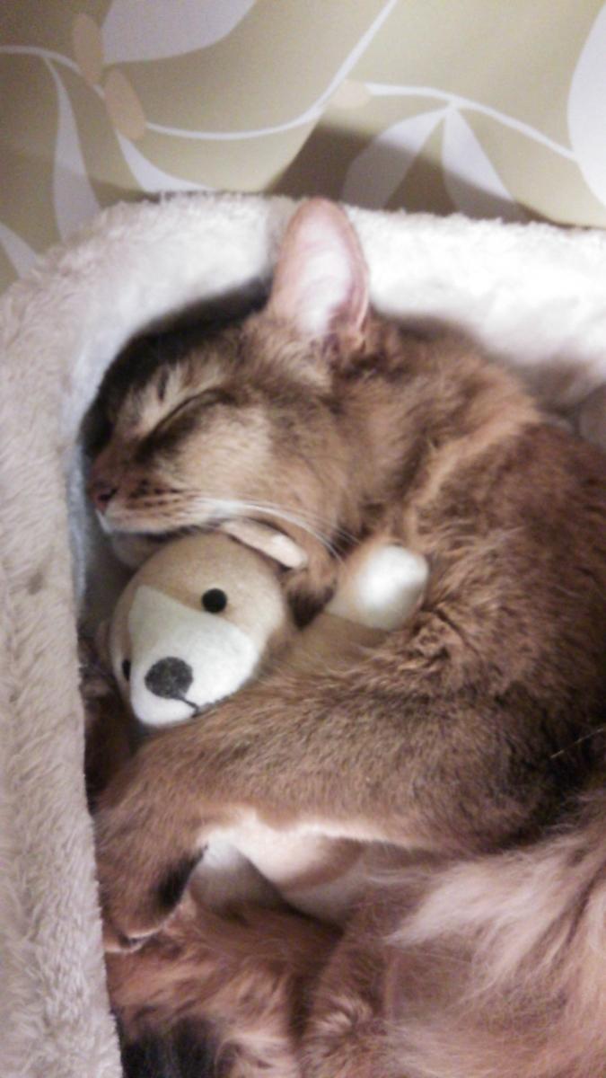 狭いところで寝る猫、チー