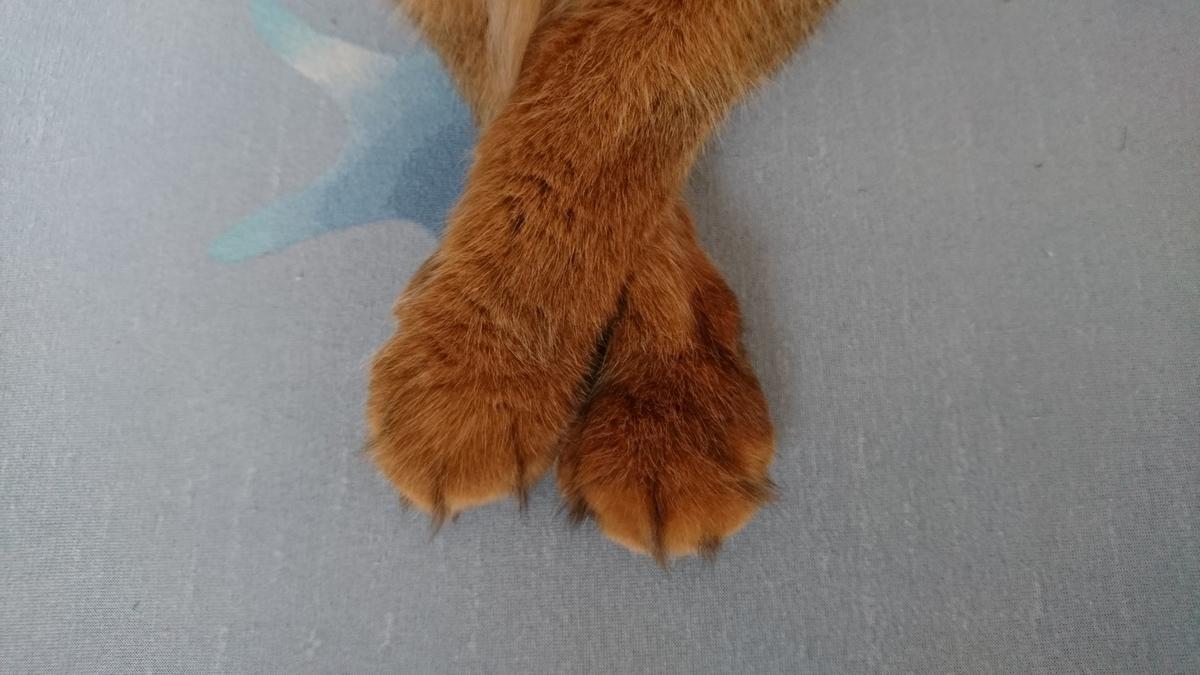 足を組む猫、チー