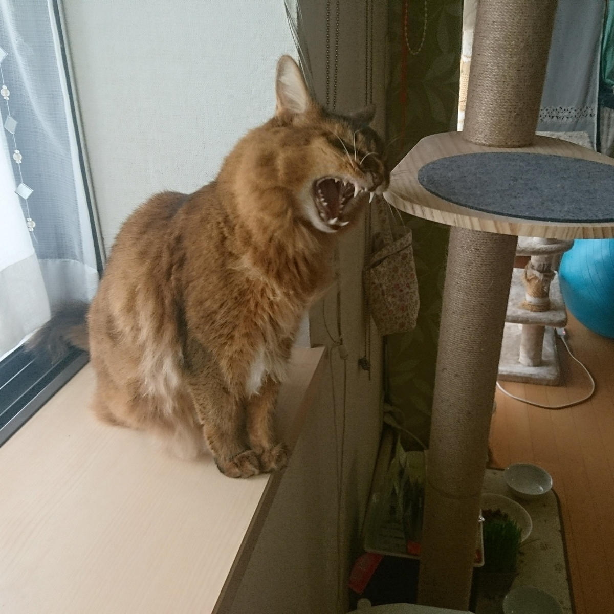 すりすりする猫