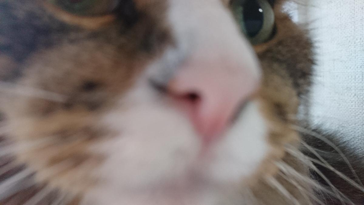 猫の鼻、トト