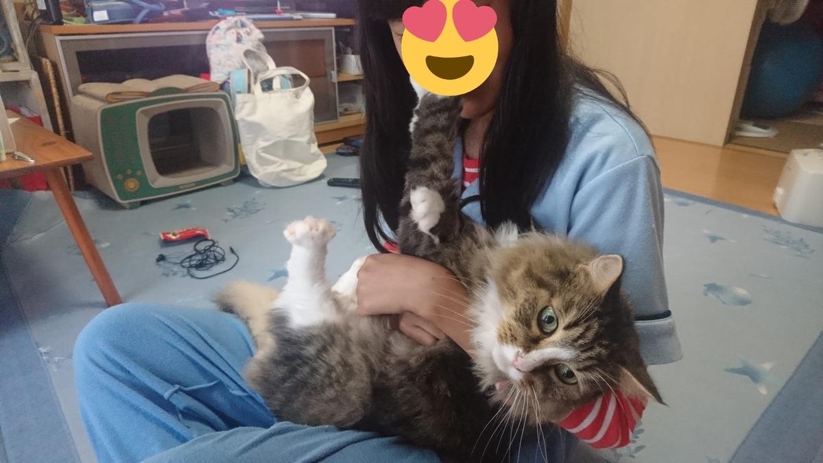 子供につかまってしまった猫、トト