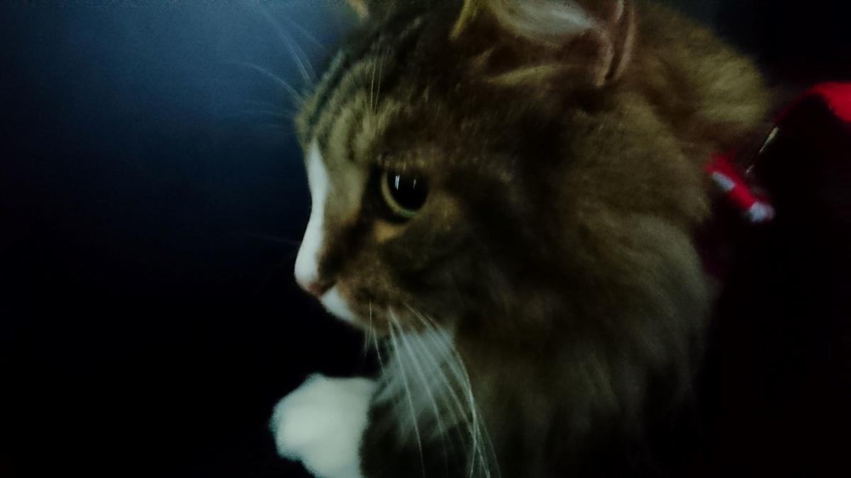落ち着きがない猫、トト