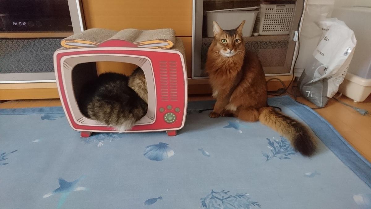 仲良く寝そべる猫、トトとチー