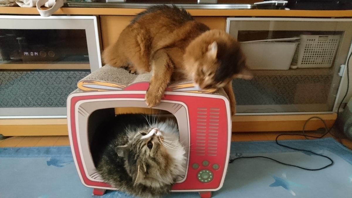 猫にちょっかいを出す猫、トトとチー