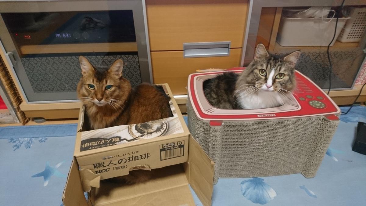 二匹並んだ猫、トトとチー