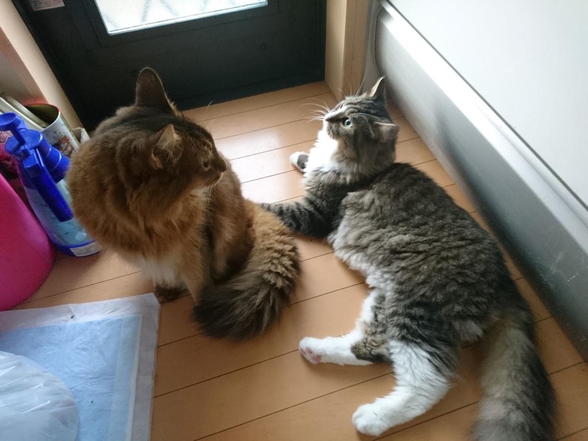 相談を始める猫、トトとチー