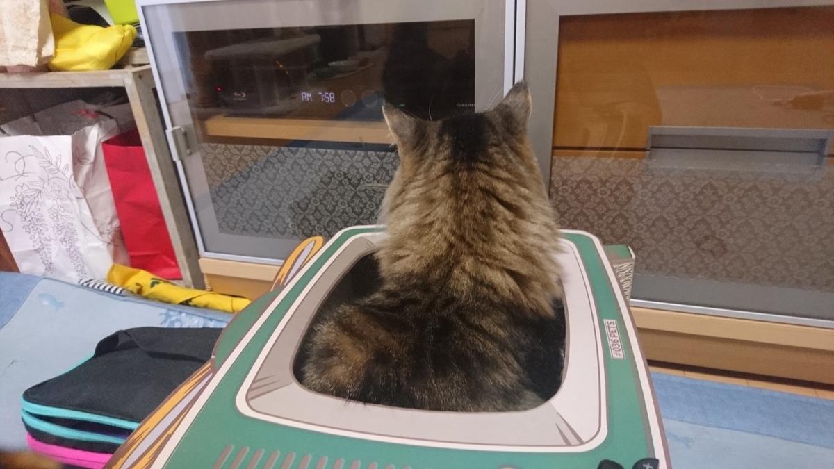 ナルシスとな猫、トト