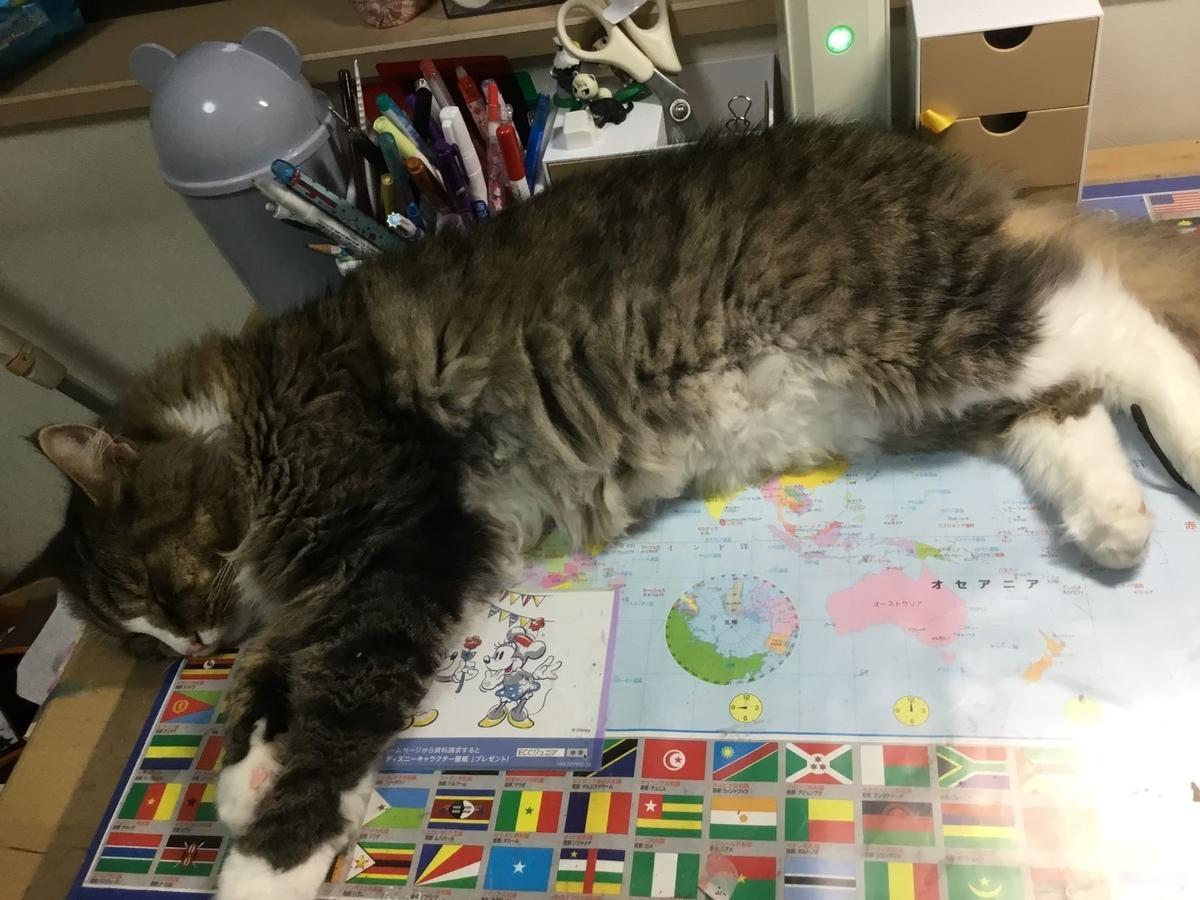 机の上で寝る猫、トト