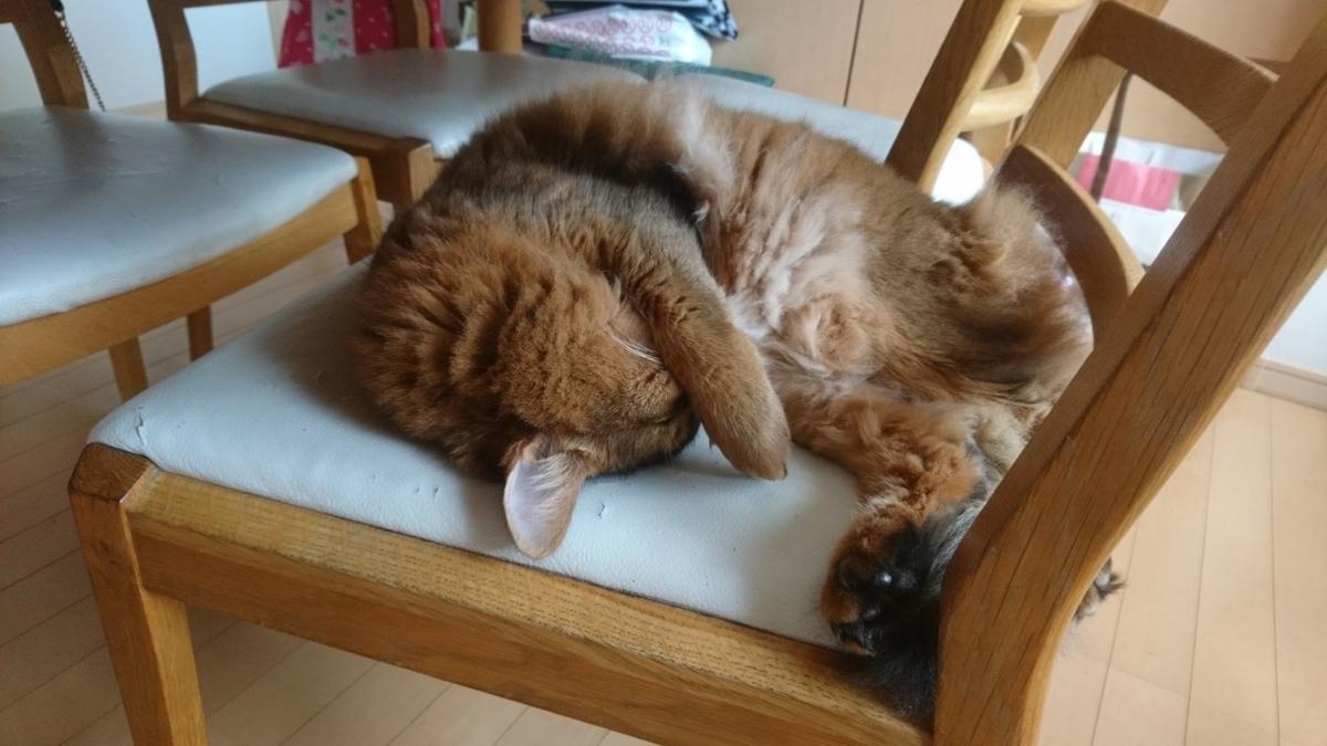 寝ている猫、チー